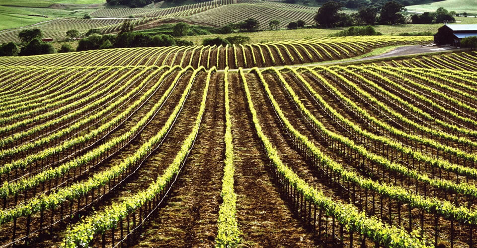Best town to stay in Sonoma